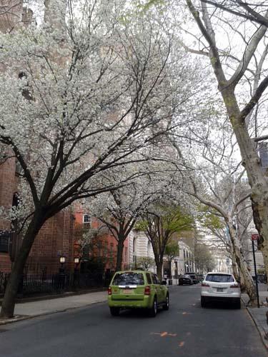 NYC Fruehling